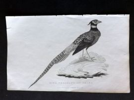 Cuvier C1830 Antique Bird Print. Ring Pheasant of China